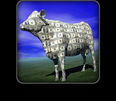 דחוף את הפרה שלך