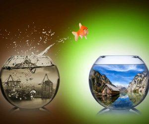 איך לעשות שינוי בקריירה או בעסק